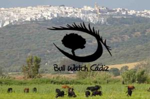 Bull Watch Cádiz