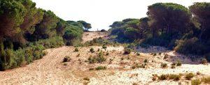 La Breña Cádiz Barbate