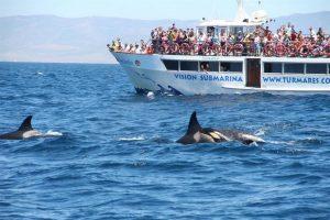 Turmares avistamientos de cetáceos