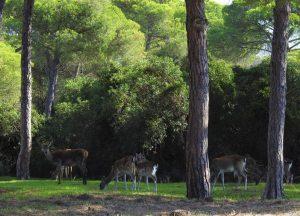 Parque Natural de Doñana. FOTO: Casa Martinete